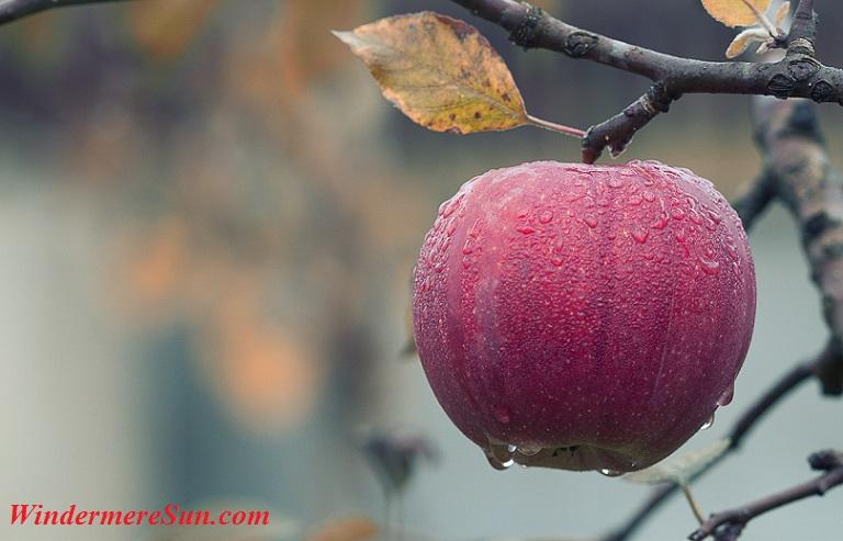 apple-pexels-photo-257840 final