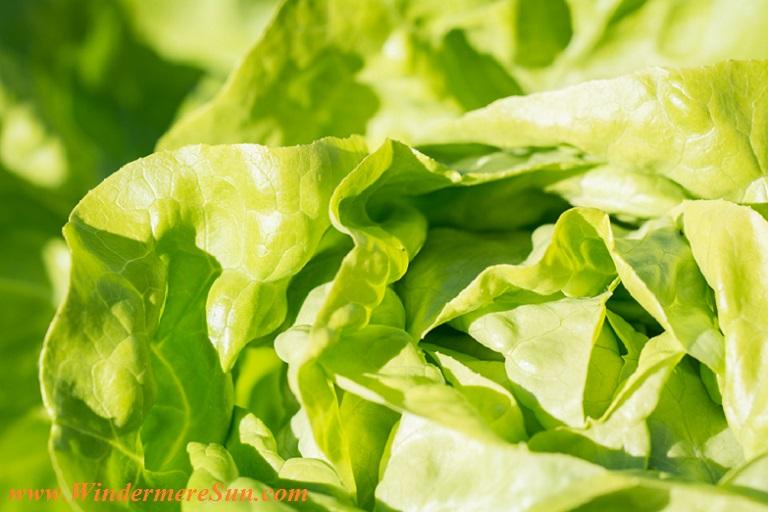 lettuce leaves-pexels-photo-208456 final