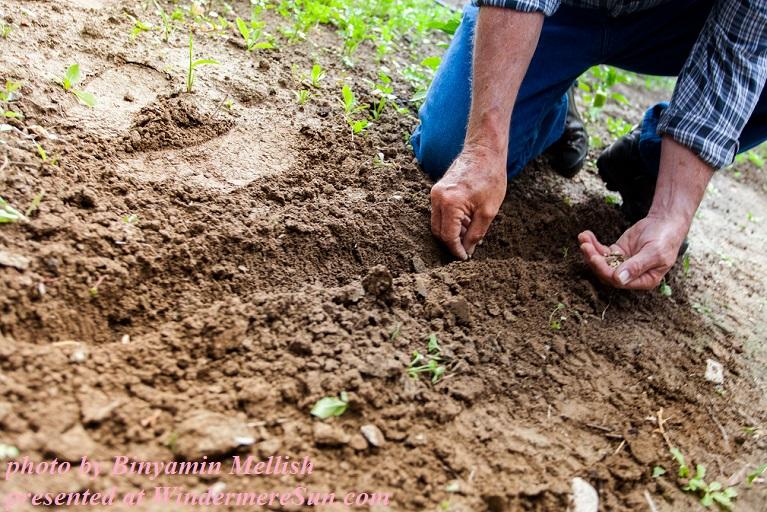 planting seeds-pexels-photo-169523, by Binyamin Mellish final