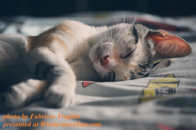 Tabby cat, white, orange and gray-pexels-photo-62640, photo by Fabricio Trujillo final