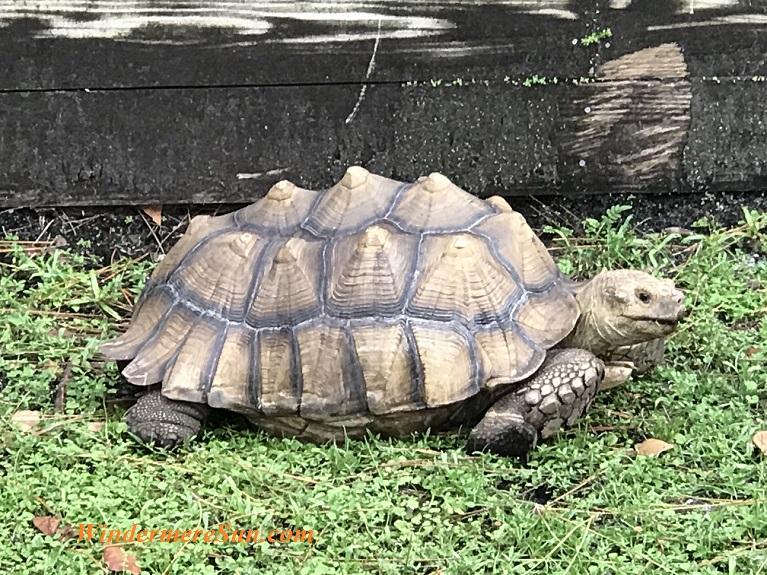 Darwin the Turtle wide final