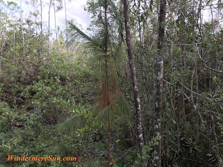 Fallen Branches final