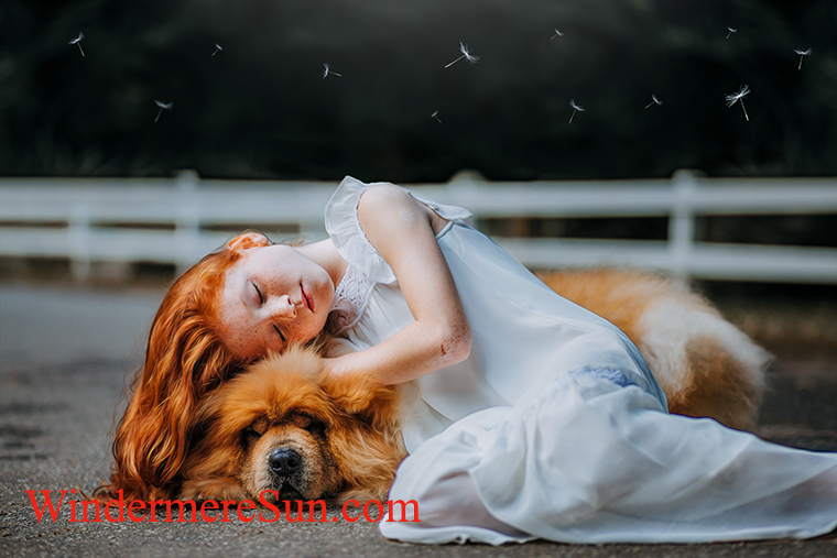 Pets-dog and her red hair-pexels-photo-573258-by Matheus Bertelli final
