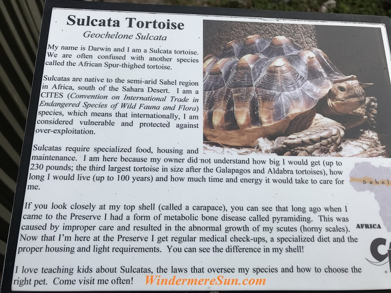 Sulcata Tortoise 2 final