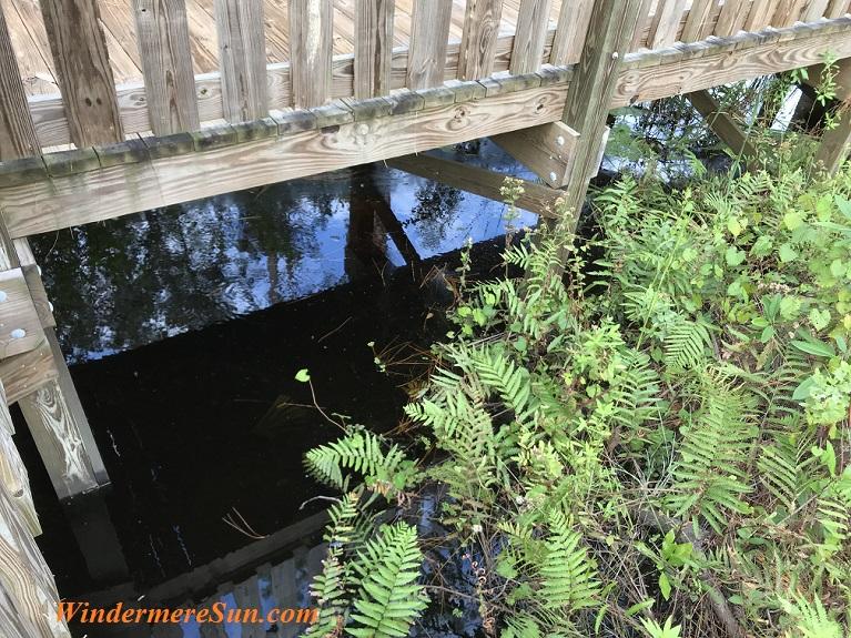 Water Below Boardwalk final