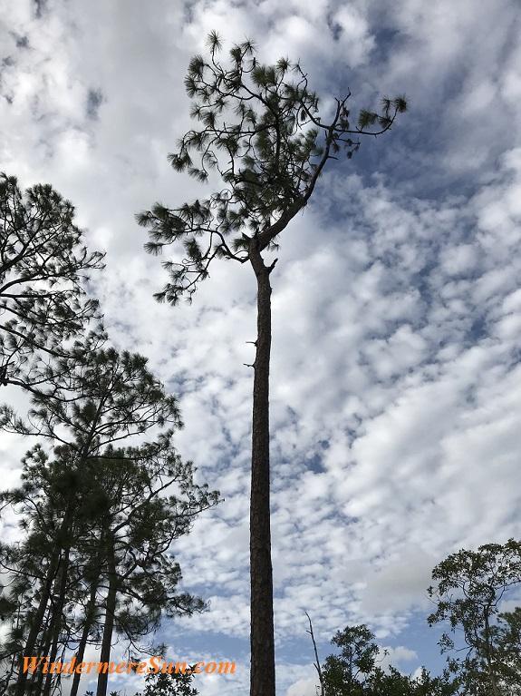 Way Up TreeTop final