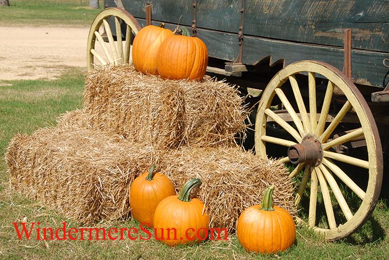 fall festival-pumplins by wheel-pexels-photo-164158 final