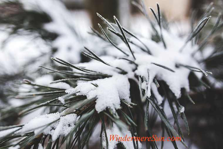 White Christmas-3-cold-snow-nature-winter final