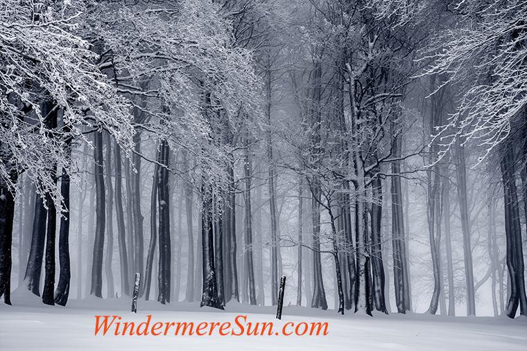 White Christmas-6-pexels-photo-235621 final