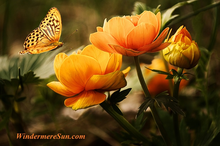 flowers-background-butterflies-beautiful-87452 final