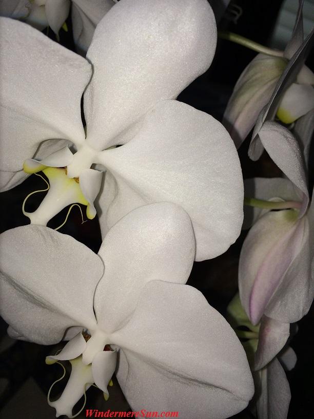 Orchids18 final