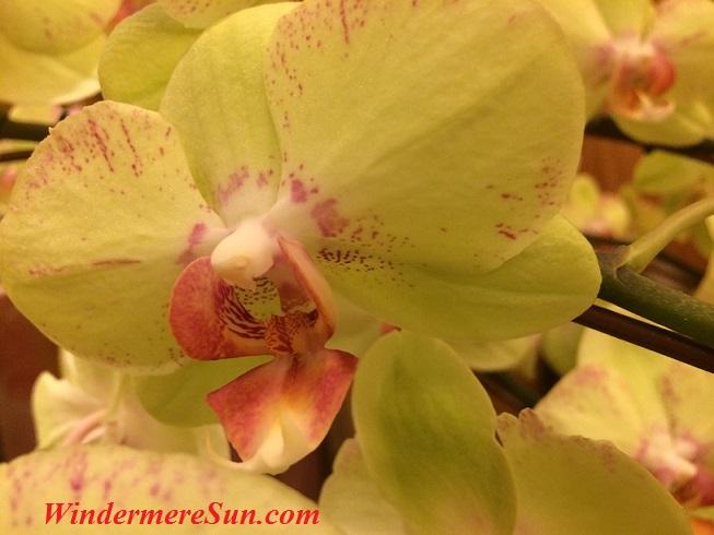 Orchids2 final