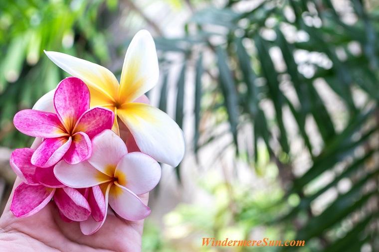 tropical flowering plant-1, pexels-photo-433539 final