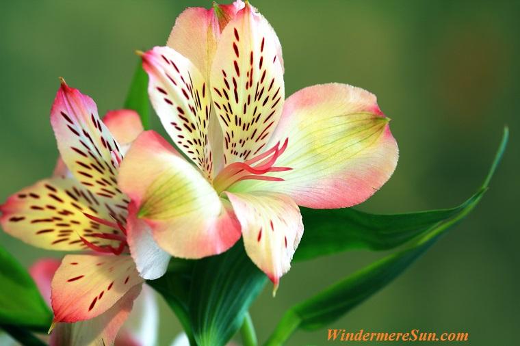 tropical flowering plant-2, pexels-photo-433539 final