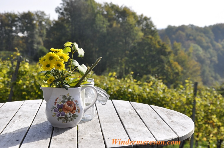 daisies in a cup on top of a wooden table above foest, pexels-photo-269220 final