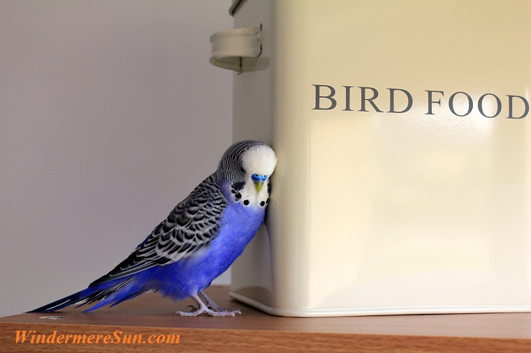 pet of 04-28-2018, bird food, pexels-photo-416189 final
