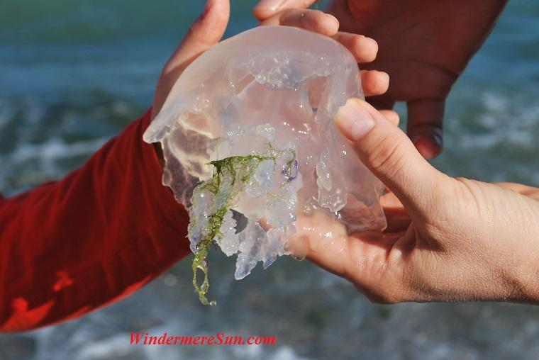jellyfish-7, blur-close-up-focus-236119. finaljpg