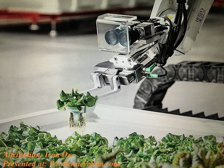Robot arm uses stereo camera to identify the plants and move them carefully from vat to vat, attribution-Iron Ox finallll