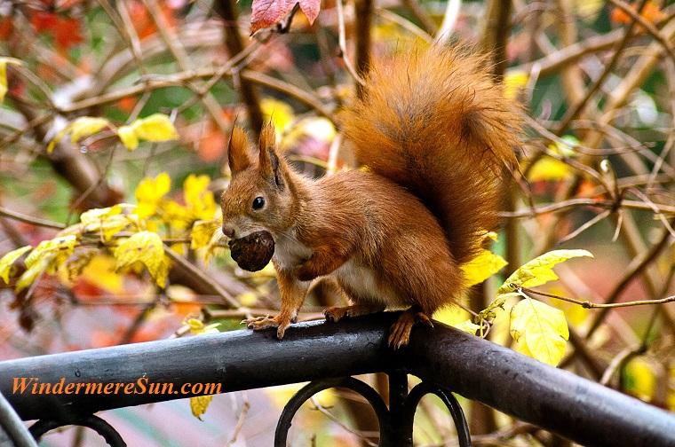 animal-autumn-cute-16484 final