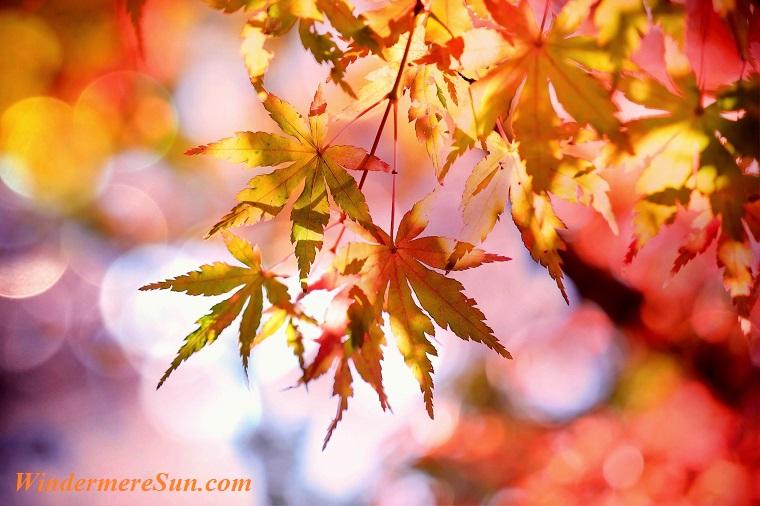 autumn-autumn-colours-autumn-leaves-355302 final