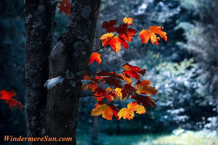 autumn-autumn-leaves-blur-589840 final