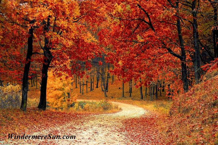 autumn-colorful-colourful-33109 final