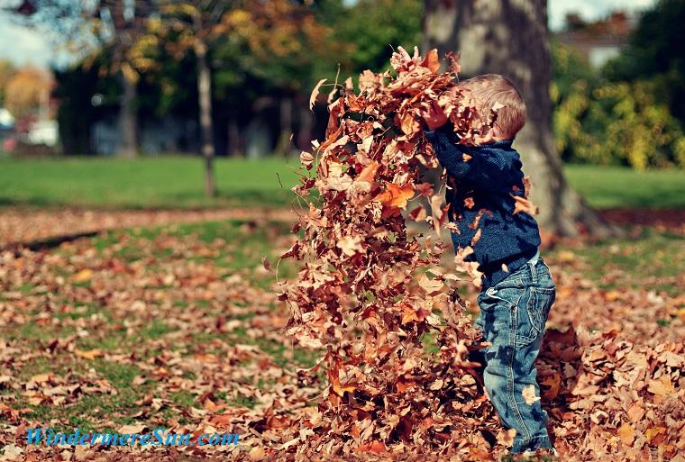 boy-child-dry-leaves-36965 final