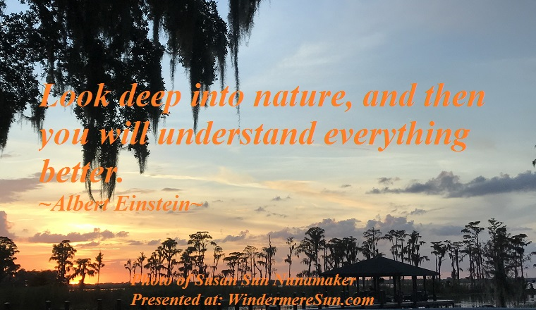 Quote of 11-10-2018, look deep into nature, and then you will understand everything better, quote of Albert Einstein, photo of Susan Sun Nunamaker final