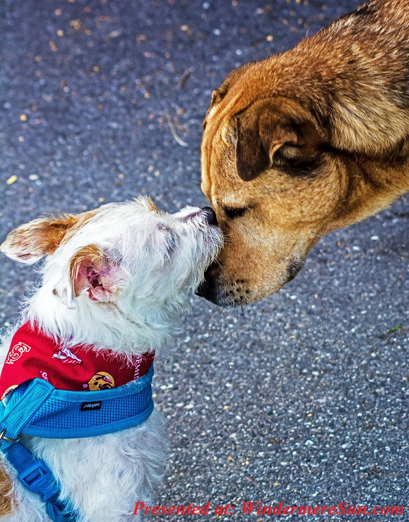 pets of 11-17-2018, 2 dogs, what a lovely way to greet, adorable-animal-animal-photography-1364729 final