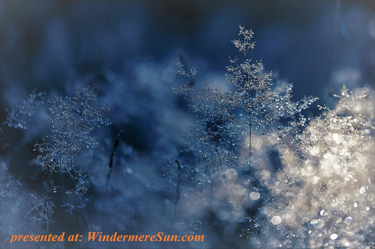 snow on branches, abstract-blur-branch-259698 final
