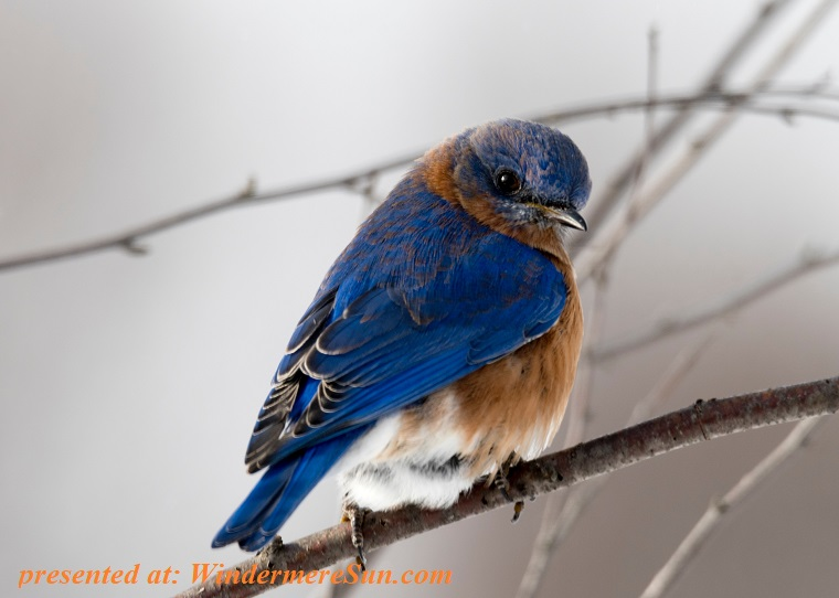 blue and brown bird, animal-avian-beak-792416 final
