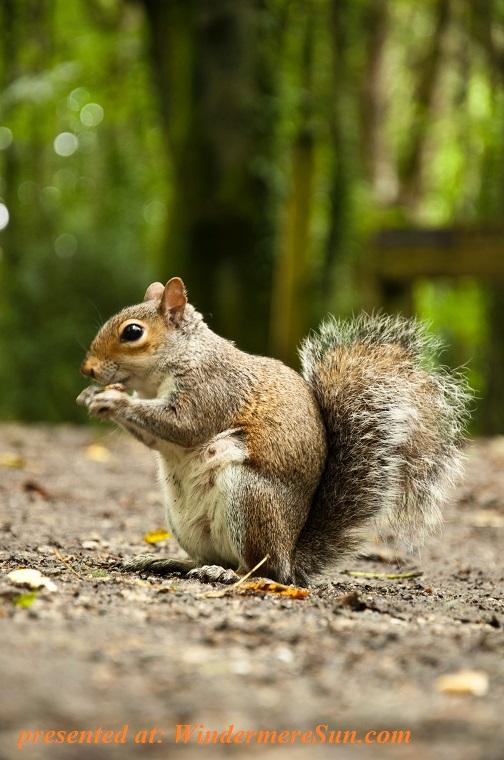 squirrel, animal-blur-close-up-1161556 final