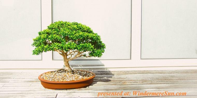 bonsai-decoration-garden-1382195 final