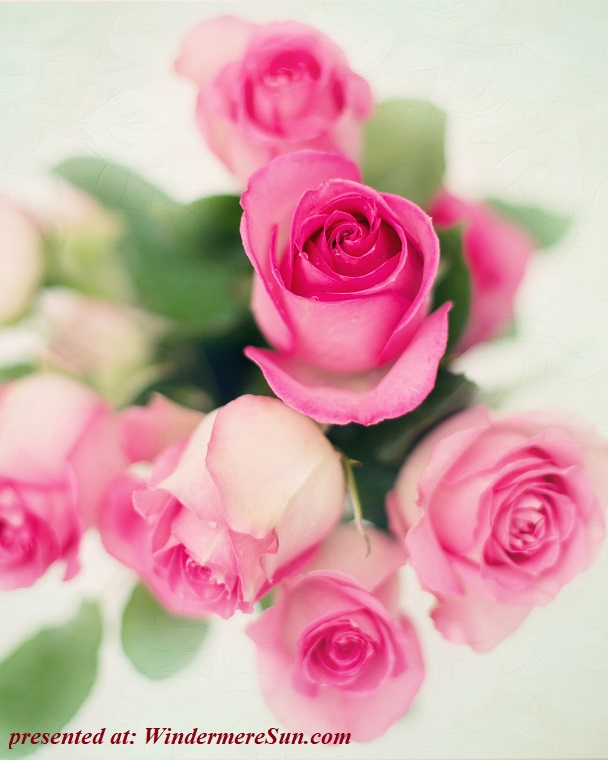 bouquet of pink roses, anniversary-beautiful-birthday-415526 final