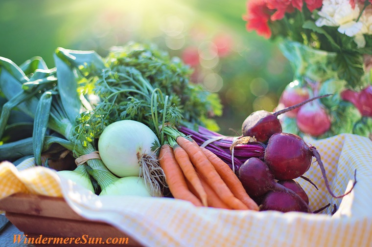 carrots, onions, etc.,pexels-photo-533360 final