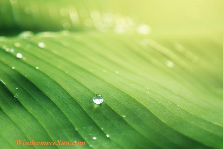 dew drop on top of leave, pexels-photo-365638 final