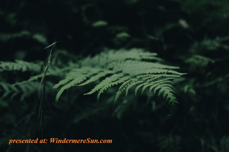 fern-green-growth-567428 final