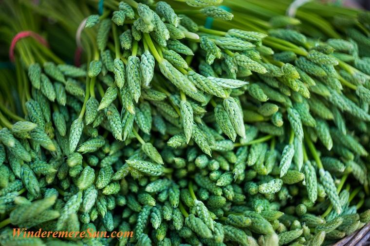 greens asparagus pexels-photo-599757 final