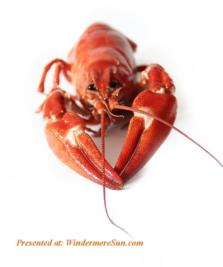 lobster, crayfish-crustacean-lobster-52998 final