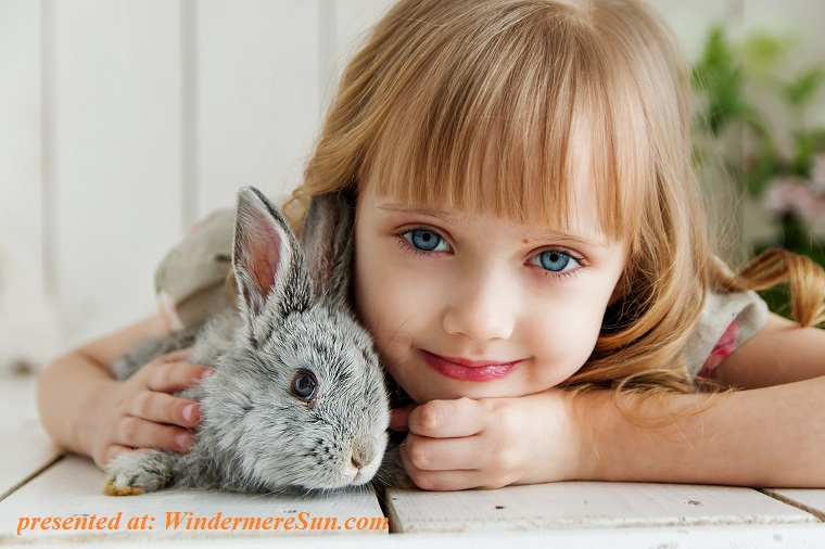pet of 2-9-2019, girl and bunny rabbit, adorable-animal-attractive-1462634 final