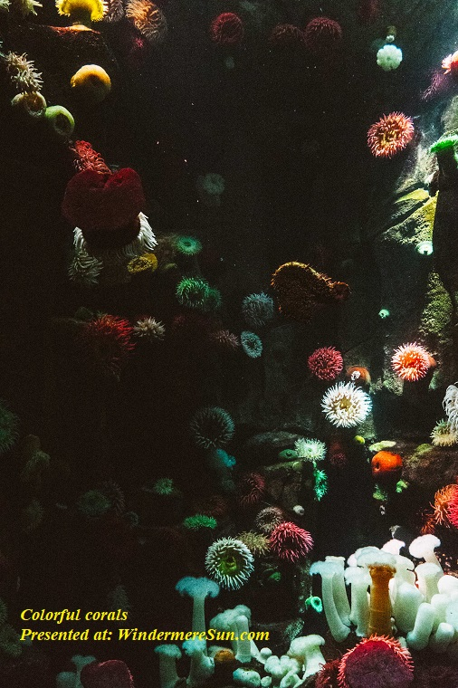 Coral Reef, colorful-colourful-corals-137613 final