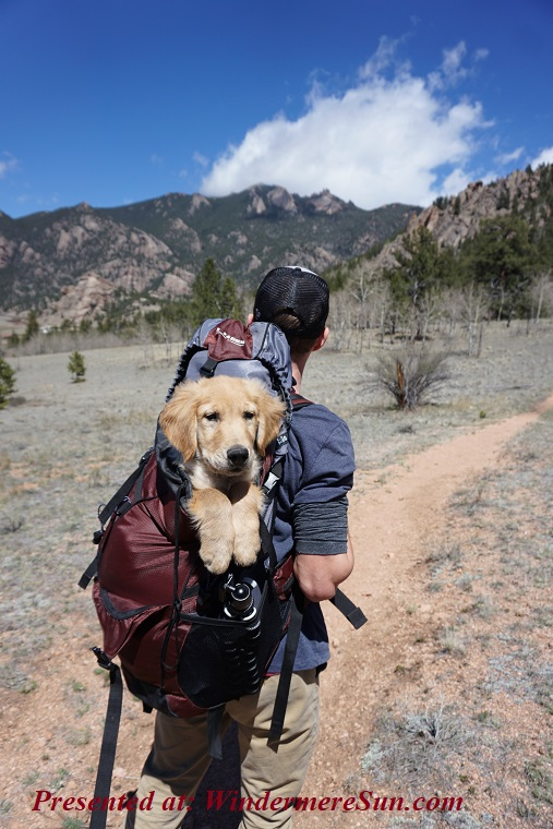 Pet of 5-25-2019, man with his dog in backpack, adult-adventure-backpack-1448055 final