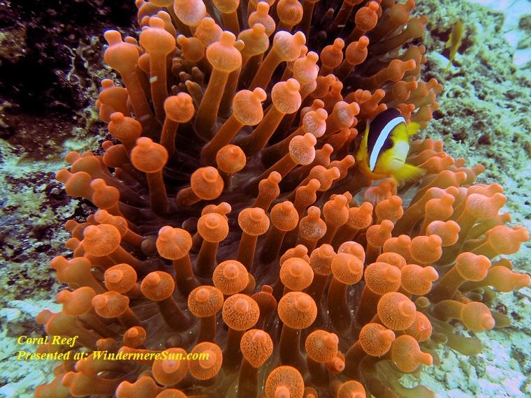coral reef, animal-aquatic-coral-1522162 final
