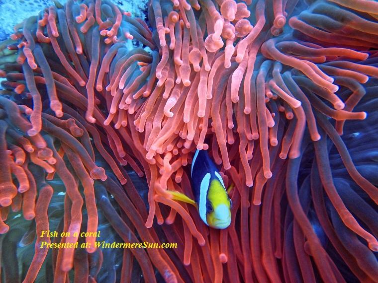 fish on a coral, aquarium-aquatic-biology-1522160 final