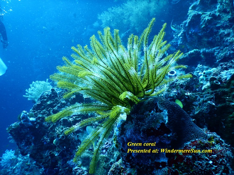 green coral, aquatic-close-up-coral-668790 final