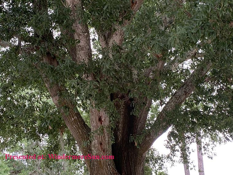 tree top final