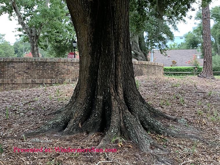 tree trunk final
