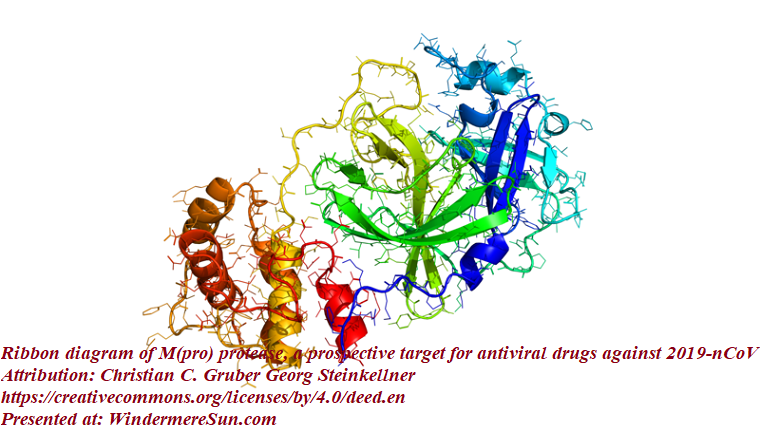 Ribbon diagram of M(pro) protease, a prospective target for antiviral drugs against 2019-nCoV, attribution-Christian C. Gruber Georg Steinkellner, CC4.0 final