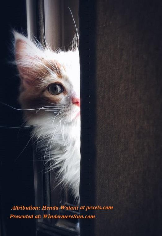 Pet of 3-21-2020, half cat. pexels-photo-320014 final