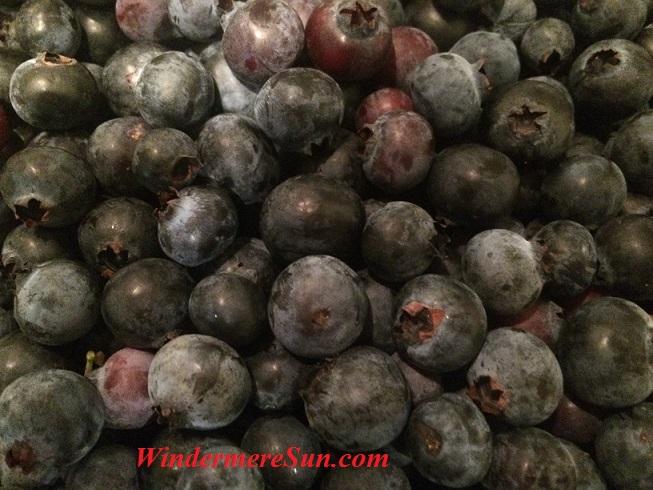 Blueberries15 final